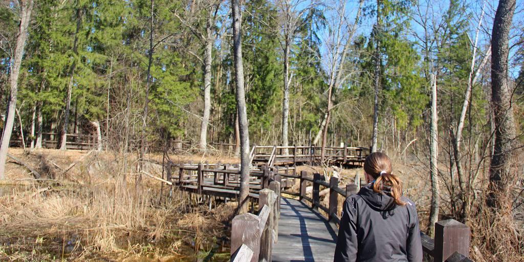«Наш дом — Брянский лес»: экскурсия по экологической тропе на усадьбе заповедника
