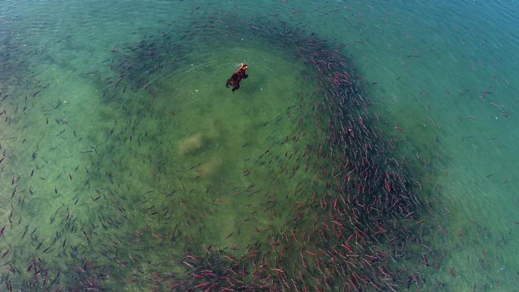 Рыба. Дающая жизнь