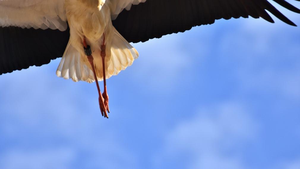«Крылья мира»: как происходит спасение диких животных