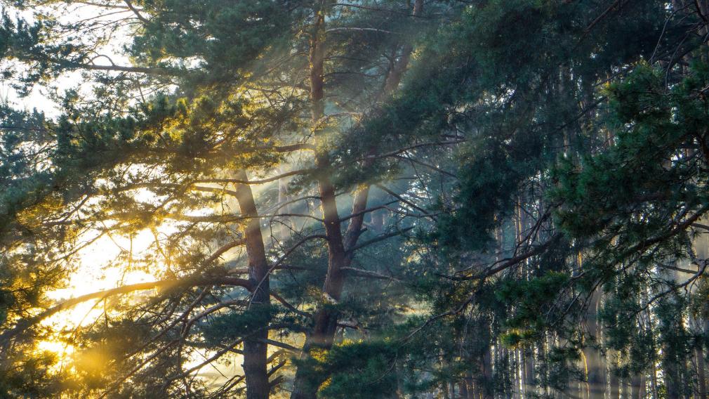 Летопись брянского леса как часть проекта фотонаблюдений за флорой России
