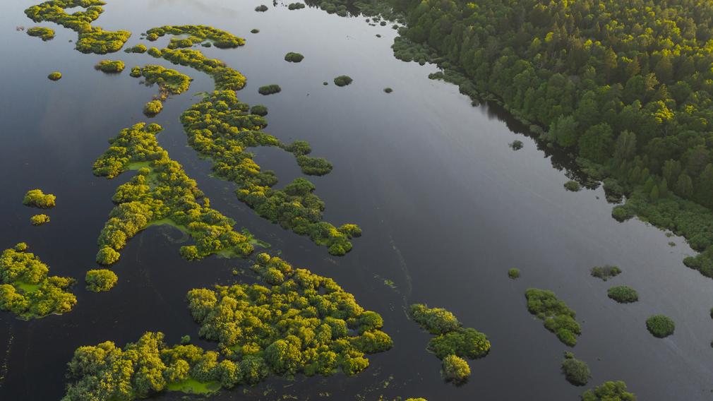 Летний паводок на Брянщине: почему реки столь стремительно вышли из берегов