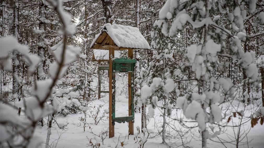 Зимнее путешествие по «Музею наличников» в заповеднике «Брянский лес»